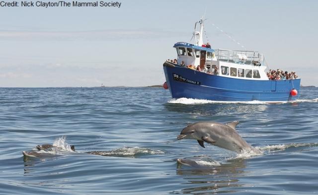 http://www.rsb.org.uk/images/Bottlenose_dolphin1.jpg