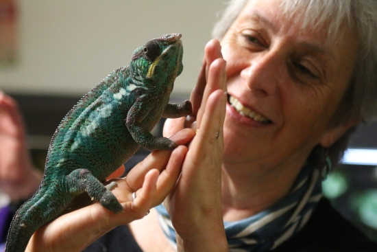 Delighted Fellow with chameleon
