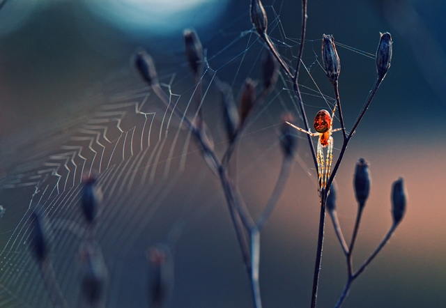 Krasimir-Matarov-Spider-From-Another-World