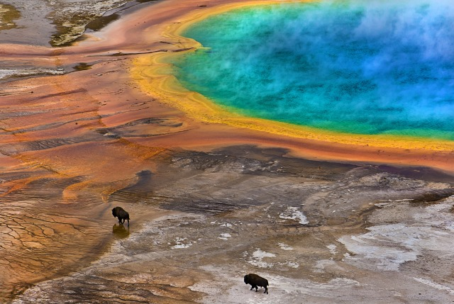 Lukas-Gawenda-Bisons-on-Grand-Prismatic-Spring-USA